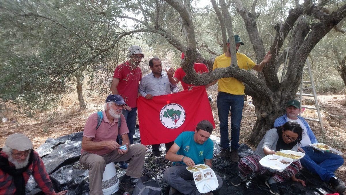 Cueillette des olives à Nahhalin