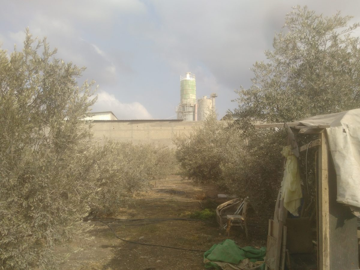 17 octobre - Cueillette des olives près de Tulkarem