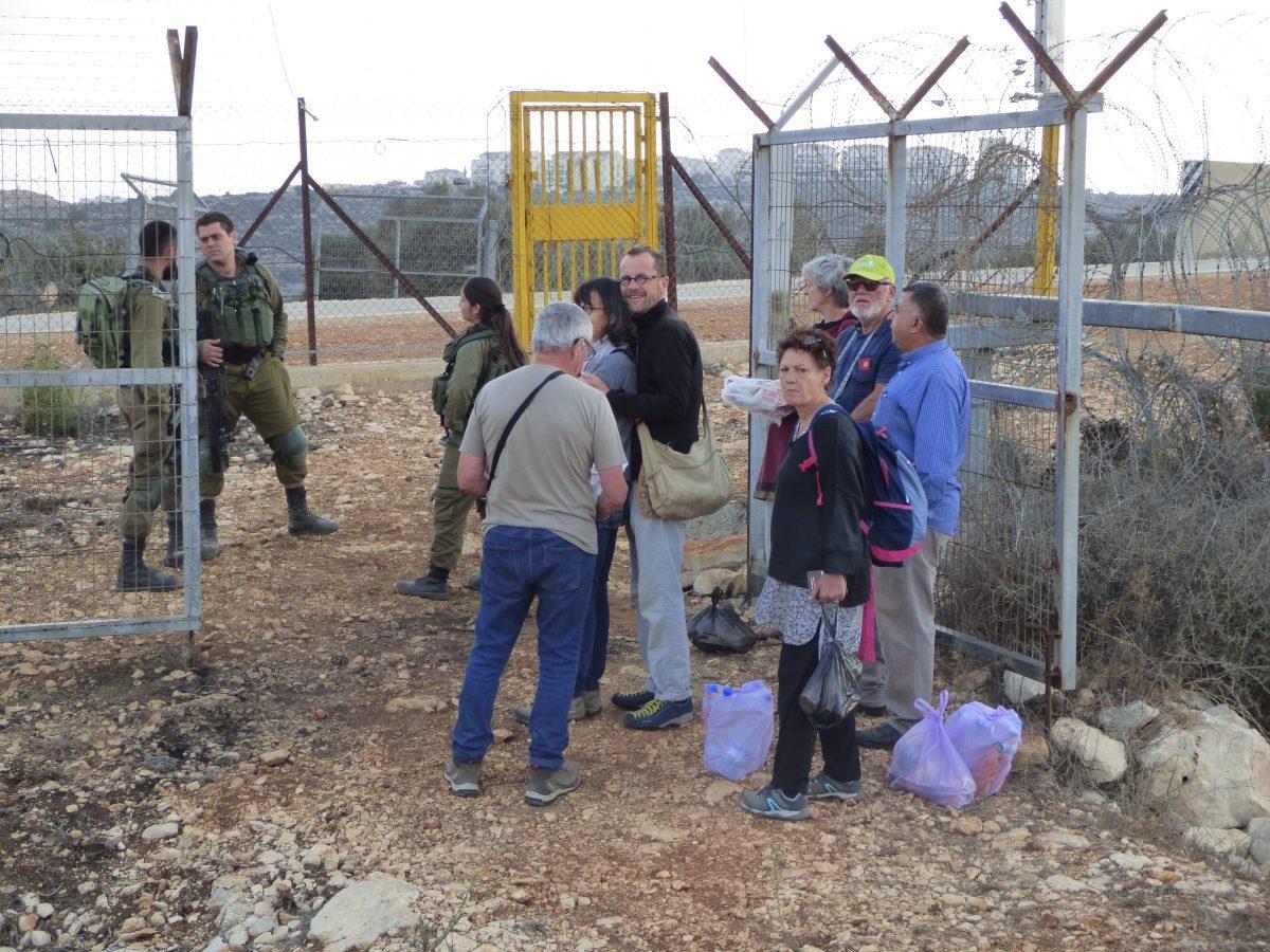 Cueillette des olives dans le district de Salfit