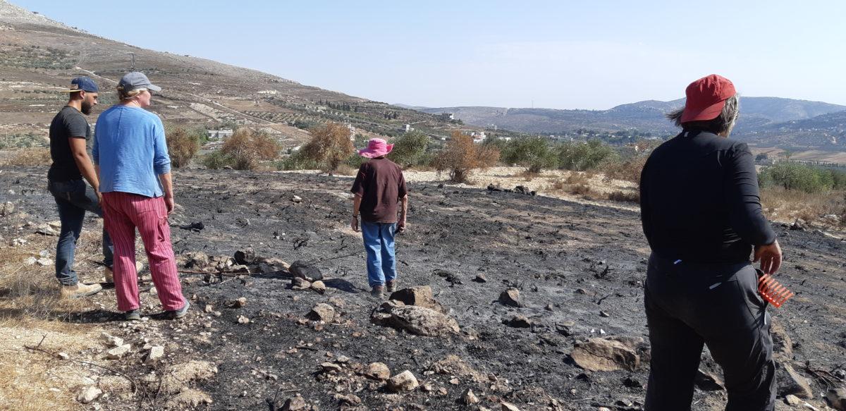 18ème campagne de cueillette des olives en Palestine occupée - Halhul, 17 Octobre