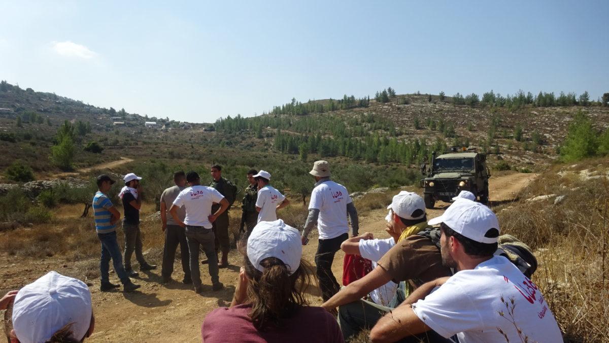 18ème campagne de cueillette des olives en Palestine occupée - Halhul, 19 Octobre