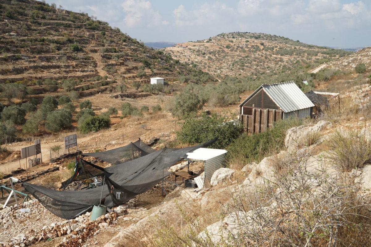 18ème campagne de cueillette des olives en Palestine occupée - Farkha, 21 Octobre