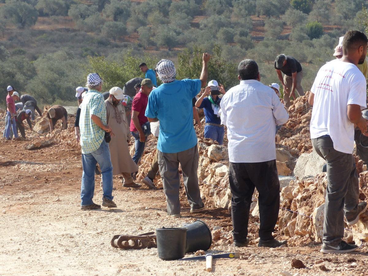 18ème campagne de cueillette des olives en Palestine occupée, Farkha, le 12 octobre